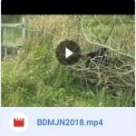 BMJN_Video_2018
