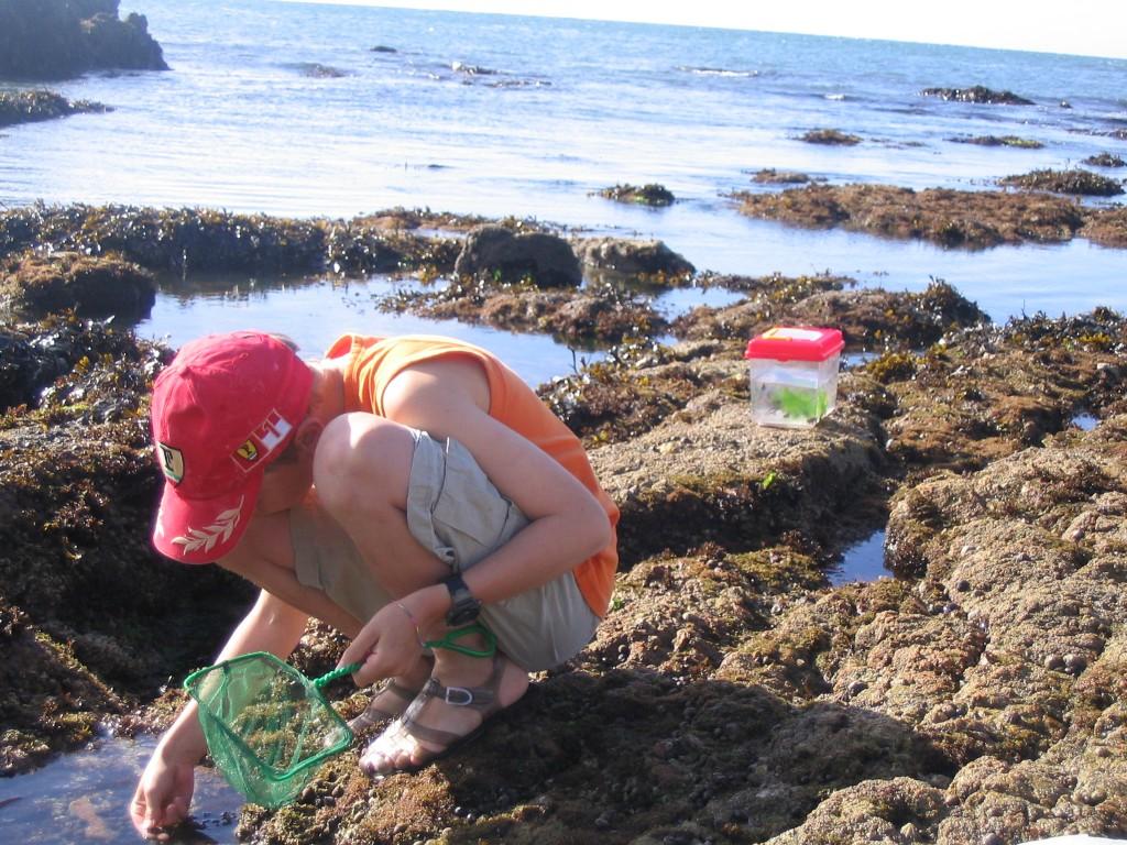 Coquillages et crustacés - OT Pouliguen