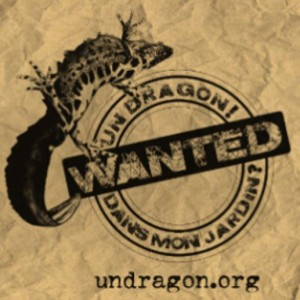 Dragon.org