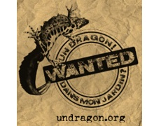Dragon.org_image_for_grid